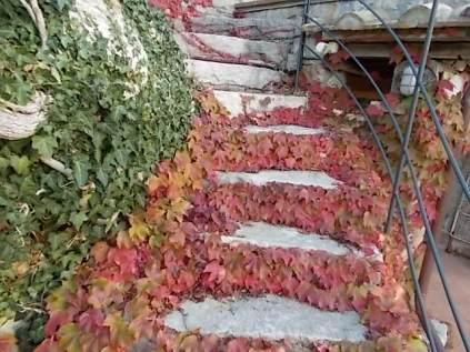 foglie rosse di vite americana e bricco dell'acqua vertine (5)