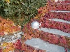 foglie rosse di vite americana e bricco dell'acqua vertine (8)
