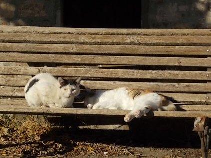 la panchina dei gatti di rietine (1)