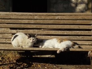 la panchina dei gatti di rietine (2)