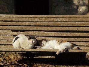 la panchina dei gatti di rietine (4)