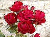 rose-di-vertine-10