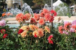 siena in fiore autunno 27 - 28 ottobre 2018 (16)