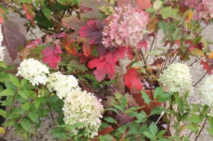 siena in fiore autunno 27 - 28 ottobre 2018 (44)