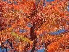 vertine-colori-dautunno-18