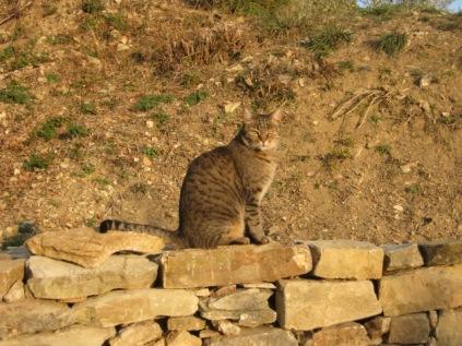 gatto e muro a secco