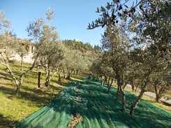 piccoli olivicoltori di vertine (3)