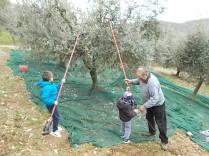 piccoli olivicoltori di vertine (4)
