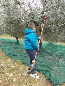 piccoli olivicoltori di vertine (7)