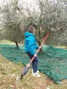 piccoli olivicoltori di vertine (8)