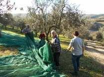 raccolta olive vertine 2018 (20)