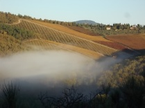 raccolta olive vertine 2018 (9)