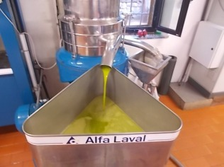 vertine-raccolta-olive-2016-11