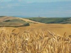 grano-e-armonia-della-berardenga-8