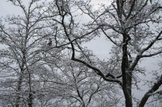 neve nel chianti 13 dicembre 2018 (19)