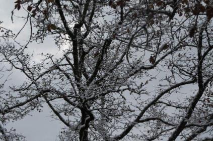 neve nel chianti 13 dicembre 2018 (20)