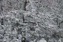 neve nel chianti 13 dicembre 2018 (26)