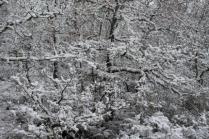 neve nel chianti 13 dicembre 2018 (27)