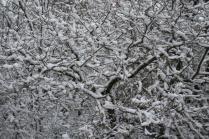 neve nel chianti 13 dicembre 2018 (28)