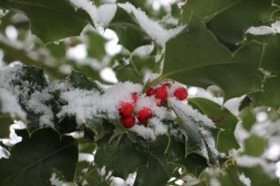 neve nel chianti 13 dicembre 2018 (31)