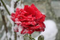 neve nel chianti 13 dicembre 2018 (33)