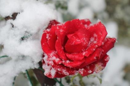 neve nel chianti 13 dicembre 2018 (34)