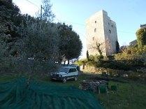vertine raccolta olive con la panda (1)