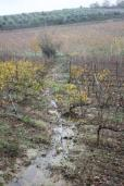 vigna risaia del brunello (8)