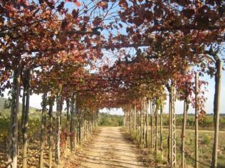vitarium-san-felice-il-viale-di-foglie-gialle-e-di-foglie-rosse-4