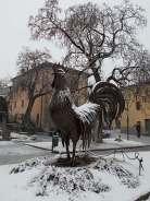gallo di fabio zacchei e neve (1)