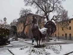 gallo di fabio zacchei e neve (2)