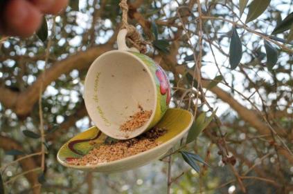 la rosa e le tazze di grano per uccelli di rapolano terme (11)