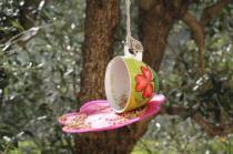 la rosa e le tazze di grano per uccelli di rapolano terme (8)