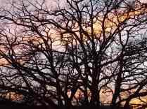 querce vertine tramonto (1)