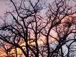 querce vertine tramonto (10)