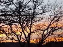querce vertine tramonto (2)