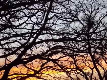 querce vertine tramonto (3)