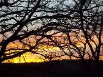 querce vertine tramonto (4)