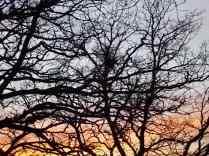 querce vertine tramonto (5)