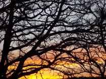 querce vertine tramonto (6)
