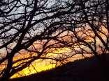 querce vertine tramonto (7)