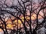 querce vertine tramonto (8)