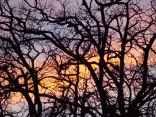 querce vertine tramonto (9)