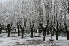 radda e la neve 23 gennaio 2019 (4)