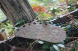 vacchereccia di castelnuovo berardenga (20)