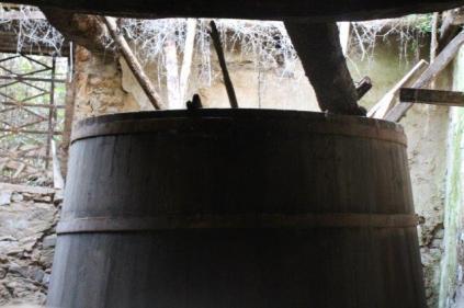 vacchereccia di castelnuovo berardenga (4)