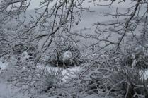 vertine neve 23 gennaio 2019 (18)