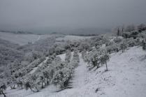 vertine neve 23 gennaio 2019 (22)