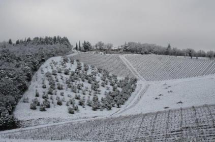 vertine neve 23 gennaio 2019 (40)