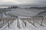 vertine neve 23 gennaio 2019 (45)